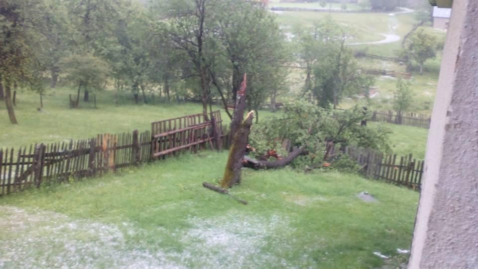 Grad lomio drveće u Kremnima Foto--M.Đ.