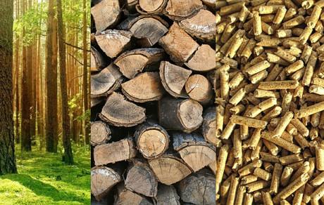 Foto---www.biomasa-grupa.com