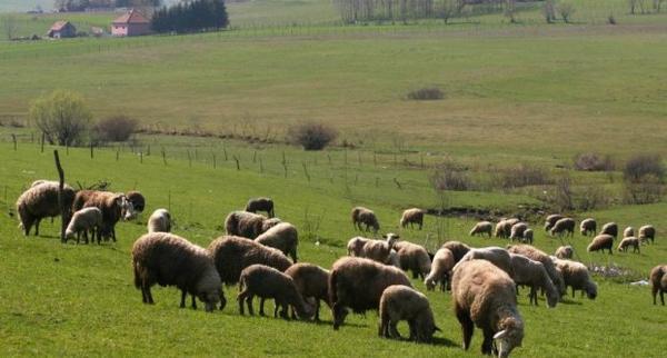 Opština Sjenica strategiju razvoja bazira na ulaganjima u poljoprivredu Foto--www.sjenica.com