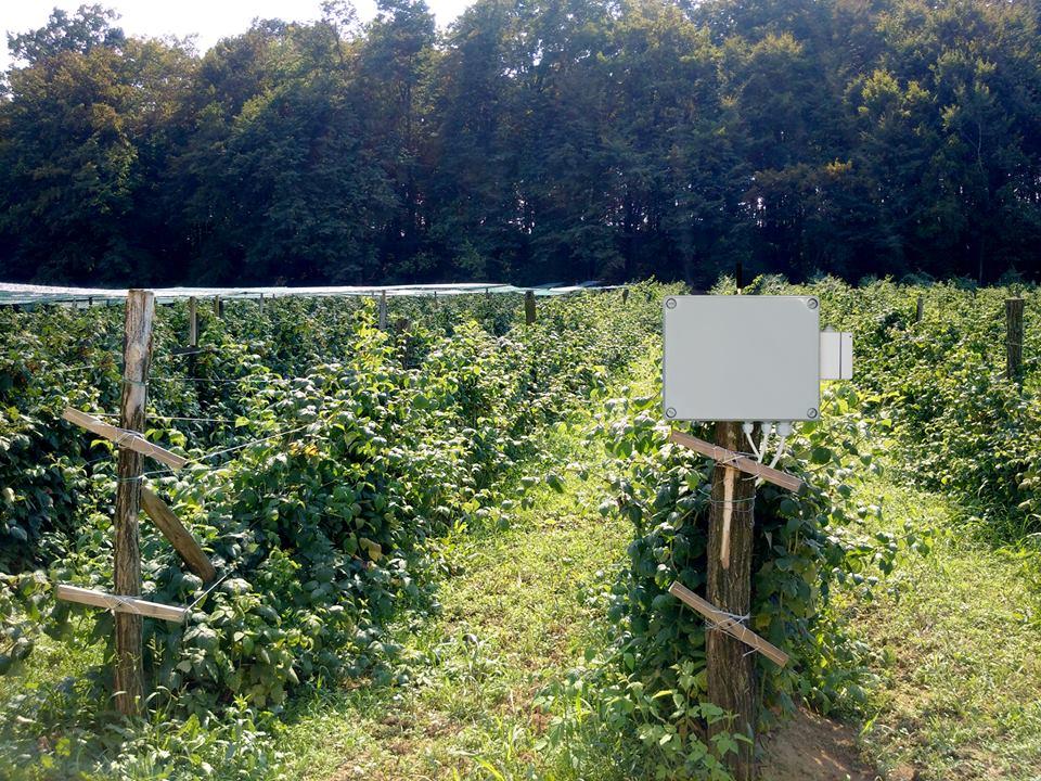 Sistem za zalivanje malina može se nabaviti preko subvencioncija grada Užica Foto--L.J.