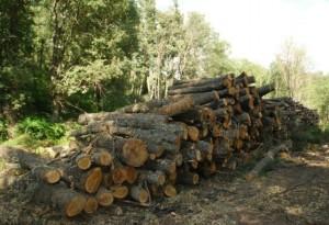 Priboj biomasa